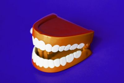 model of mouth and teeth