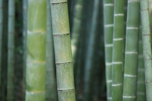 bamboo and dental history